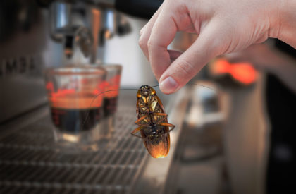 Woman's Hand holding cockroach on coffee machine fresh background, eliminate cockroach in coffee shop and kitchen